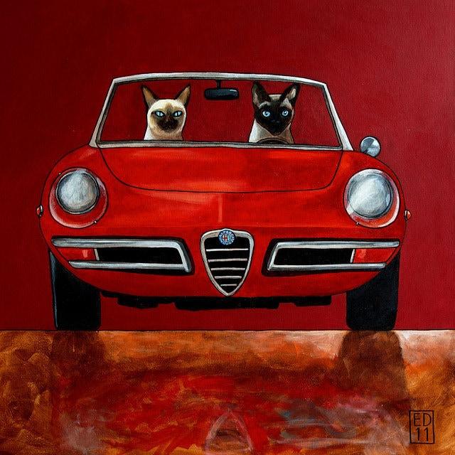 152 Alfa Giulia Spider Duetto And Siamese Cats Driving Car