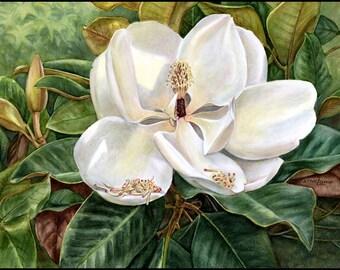 Magnolia 12x16 Watercolor Print