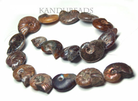AMMONITE (ammolite) Iridescent Fossil shell Beads 7 inch strand 22-35mm (aprox 6-7 beads) NATURAL --- Very Rare
