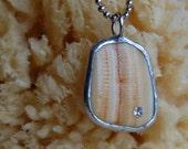 Amber Striped North Carolina Beach Sea Shell Pendant Necklace