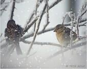 Little Winter Birds Photo -Bird Photographic Print  - Bird Photography -  Winter - Snow - Nature