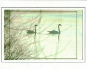Dreamy Swans Greeting Card