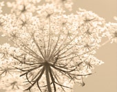 Queen Annes Lace - Wildflower Photo - Sepia Photo - Nature- Botanical - Fall