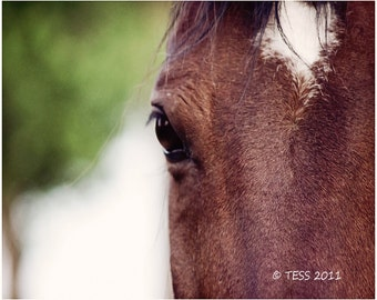 Horse Photography - Beautiful Face 3 Photo - Equine Photo - Nature