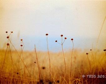 Amber Prairie Photo - Prairie Grass Photography Print - Meadow Photo -  Nature