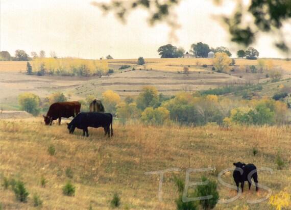 Peaceful Pasture Scene - Pasture Photo Print - Country Scene - Iowa