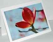 Pink Dogwood Blossom - Photograph Blank Note Card