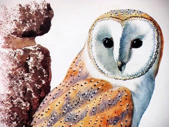 Owl,  Original Vintage Plate, n1