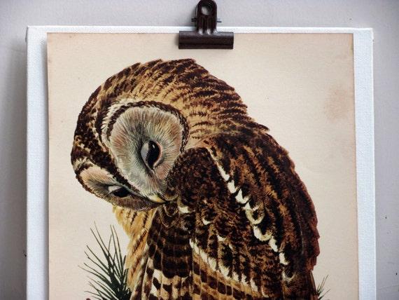 Owl,  Original Vintage Plate n2