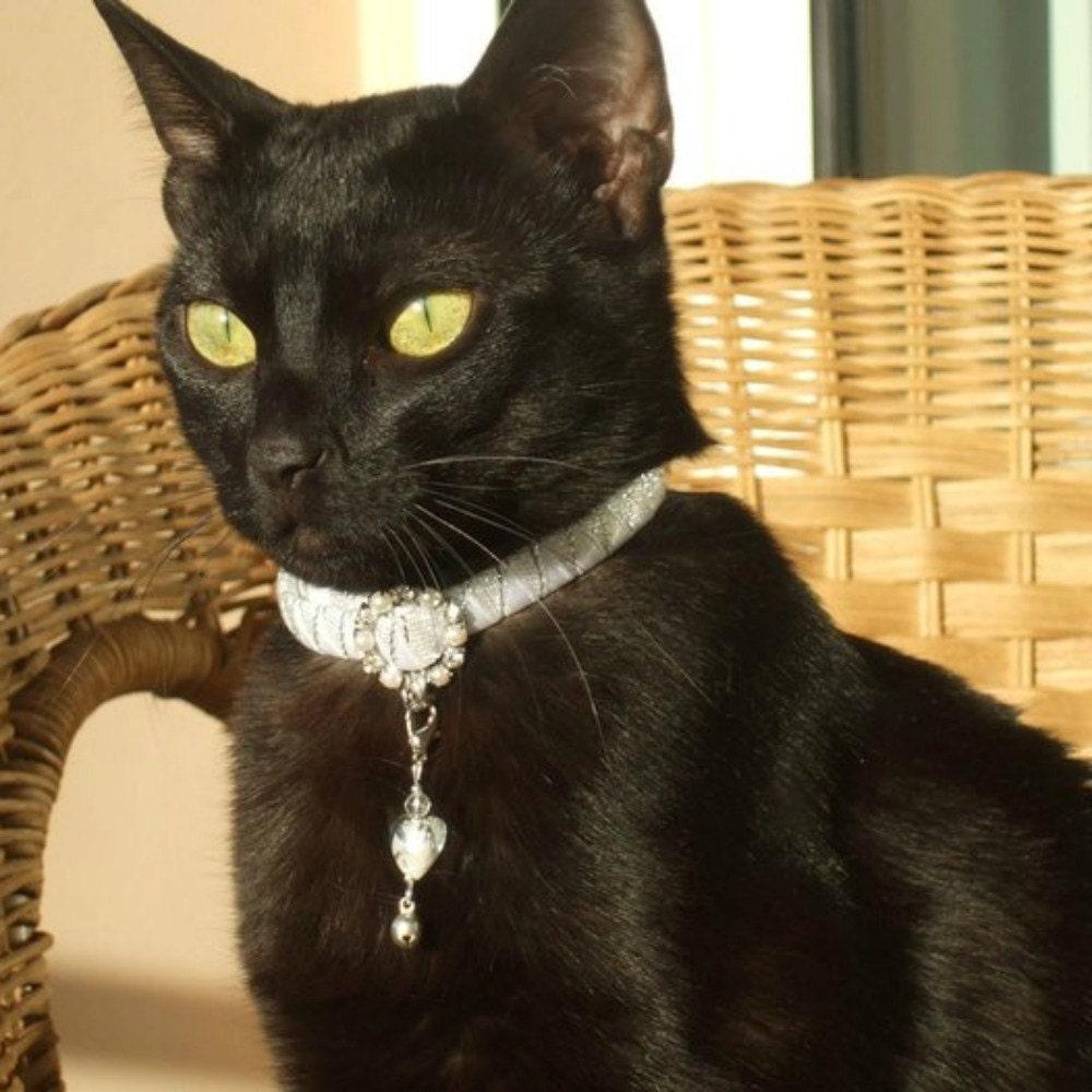Wear A Black Cat Collar