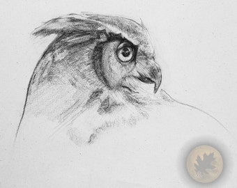 Owl in Graphite 8 x 10 Print- FREE SHIPPING