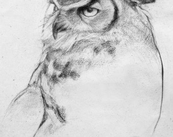 Owl In Graphite-8x10 Print-Free Shipping