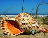 Sea Shells-Photo Cards Set-Greeting Cards-Blank Photo Cards-Fine Art Photography