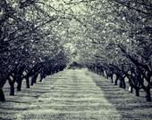 Through The Blossom Trees 8x10 Fine Art Print