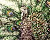 Peacock Pride - Original Fine Line Drawing