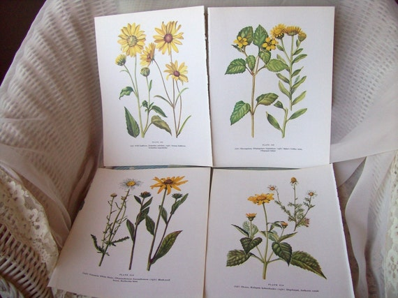 Antique Vintage Boitanical Wildflower Illustration Prints    Bring a Bit of Spring Right Into Your House
