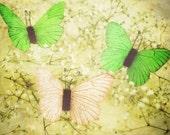 Flutter - 8 x 8 Fine Art Photograph - green yellow spring butterfly home decor print