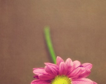 Pink - 5 x 7 Fine Art Photograph - pink green flower floral brown simple shabby chic romantic girlie feminine spring summer home decor print