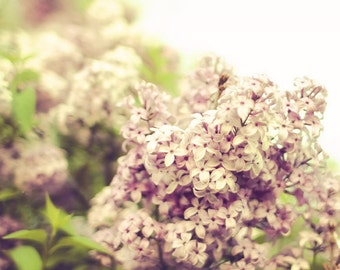 Sweet Lilac - Fine Art Photograph - delicate romantic spring floral home decor print