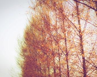 Luminance II - Fine Art Photograph - golden red tree minimalist trees landscape home decor print