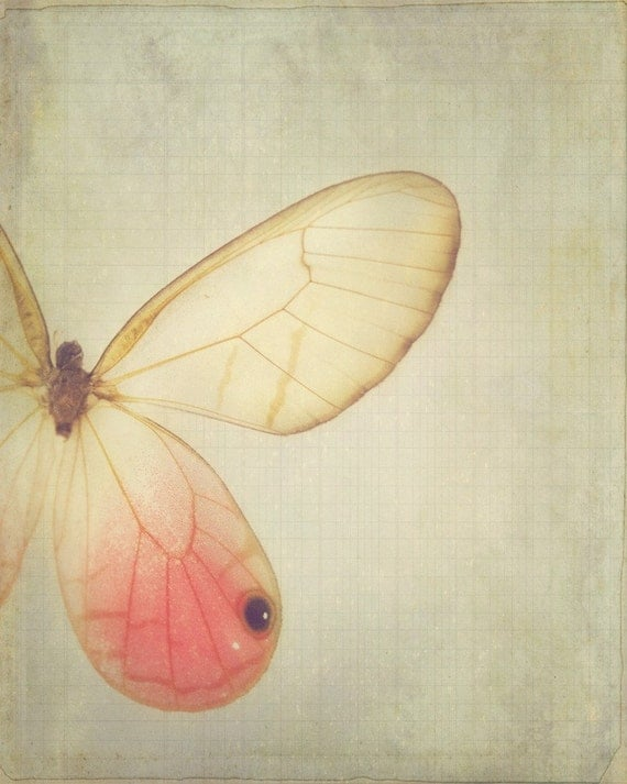 Wings - dreamy pink vintage style butterfly home decor photography print