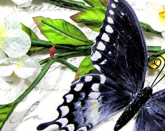 Butterfly Embellishments Black and White Elegance
