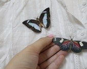 Butterfly series set of two butterfly brooch light blue brown red and black