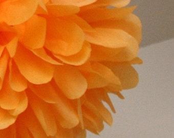 Apricot - one pom