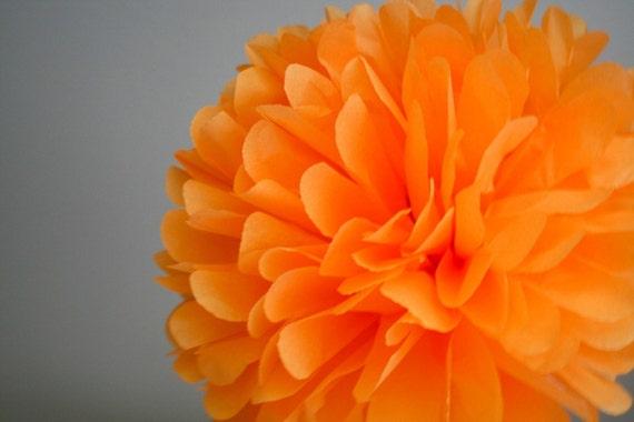 Orange - one pom