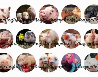 INSTANT DOWNLOAD...Pigs and Piggies 1 Inch Circle Images Collage Sheet for Bottle Caps ...Buy 3 get 1