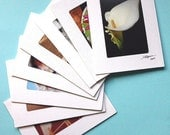 Box of 8, Multi-Occasion Assortment Photo Greeting Cards