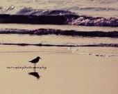 Can You Hear What I Hear - Original Bird on the beach Beach bum Ocean is calling Summer Beach bum Fine Art Print 8x8