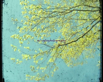 Reach The Sky - Soft Blue and Yellow warm easter wall decoration Spring buds Beautiful Spring modern nursery deco Fine Art Photograph Print