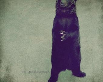 Please Please -  forgive me Apologize brown black bear sorry dear please please cute black Fine Ar Print 8x8