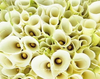 Crowded Paradise - Calla Lily Spring love Wedding gift Marry me Milky Creamy Love Christmas gift Fine Art Photograph Print 8x8
