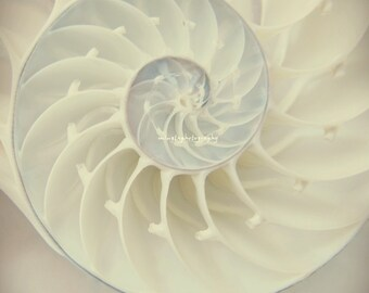 Ocean Dreaming Nautilus Shell Ocean is calling Beach bum Wedding gift Gift Beach house decor Summer decor  color photography home deco