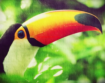TUCAN - Excotic bird tropic traveling forest colorful natural Male Tucan color photography christmas gift idea summer orange yellow