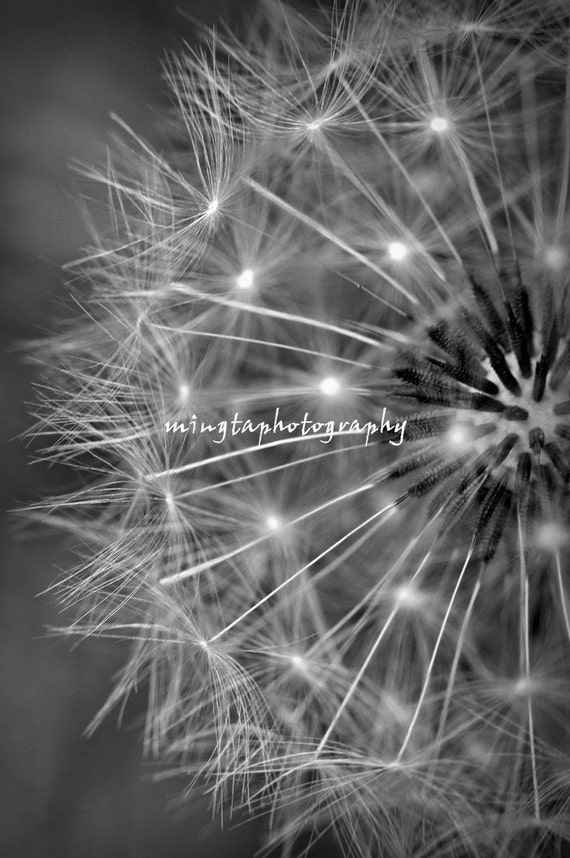 A Dandelion Clock - Dandelion Seeds winter art decor make a wish fly with me earthy tone nursery girly wall decal Fine Art Print 5x7