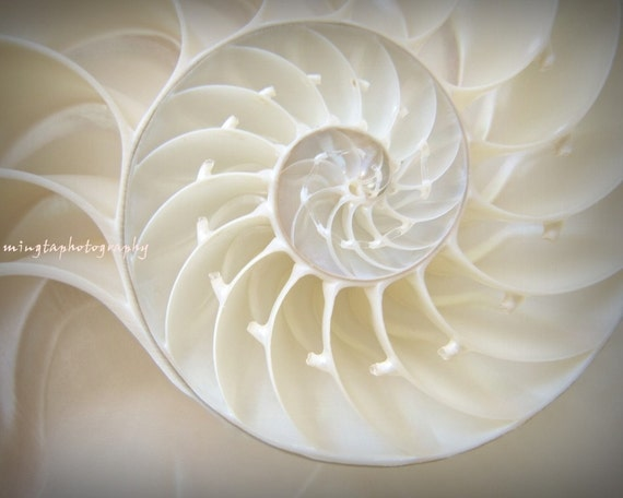 Ocean Dreaming - Nautilus Shell treasury Beach lover Valentines day gift for BF GF beach house decor Fine Art Print 20x30 - Limited 3/50