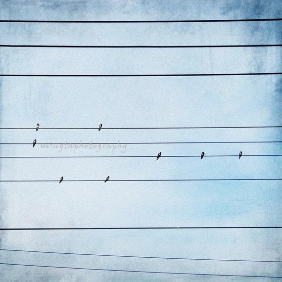 212111 - birds on the wires, birdy, Birds, Feathered friend,Wall art, Birder, Gift, spring decor, spring, Fine Art Photograph 8x8