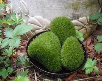 Tranquil  Covered Moss Stone Set .... 5 Faux Moss Rocks ~ Zen Rock ~ Fairy Garden Stones