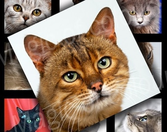 Digital Collage of Cute Cat's Portraits - 63 1x1 Inch Square JPG images - Digital Collage Sheet