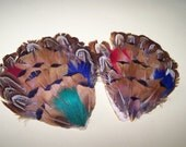 Pair of Millinery Feathers - Multi-colored