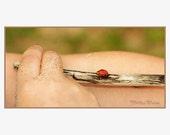 Ladybug Nature Photography abstract nursery or little girls bedroom decor 5x11 fine art photograph
