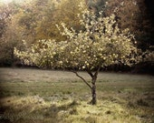 Apple Tree Fine Art Photography, Tuscan Style Home Decor, Landscape Photograph, French Country Home, Green and Gold, Vintage Style Print