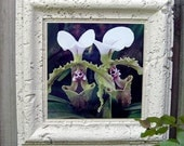 Outdoor Waterproof Ceramic Tile Art - Orchid Babies - Sugar and Spice