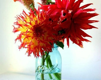 Memories Of Summer - Blue Ball Jar Dhalias