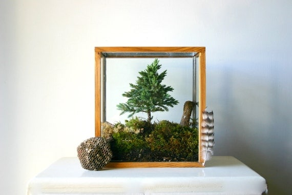 miniature forest plant kit for terrarium. Black Bedroom Furniture Sets. Home Design Ideas