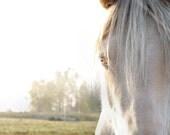 White horse closeup pale light grey animal photo horse photo wall art - 8 x 10