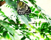 Black and white butterfly, garden, spring, entomology, spring, wings, emerald green leaves, insect  - A new day 8 x 10